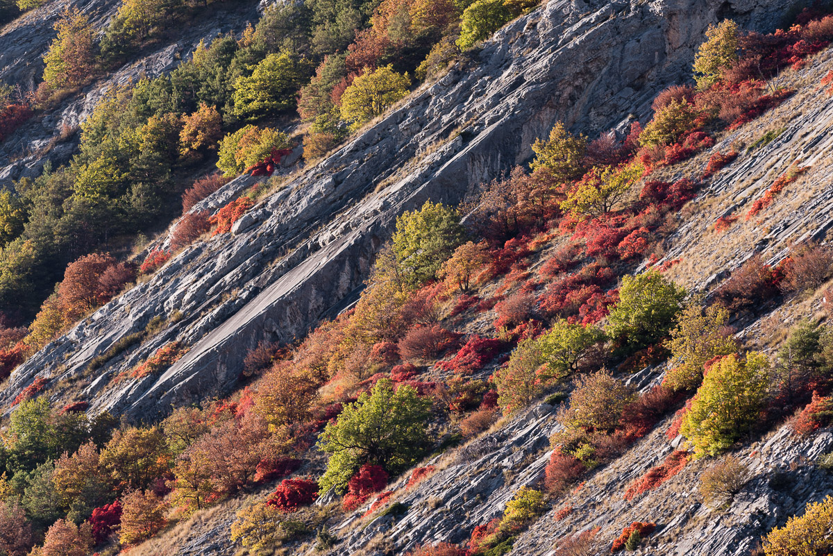 Walliser Felsensteppe